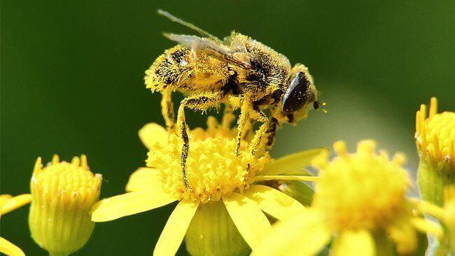 polen-yiyerek-zayiflama